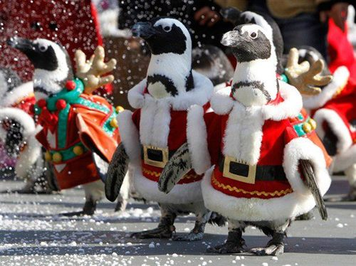 000 - Christmas Penguins